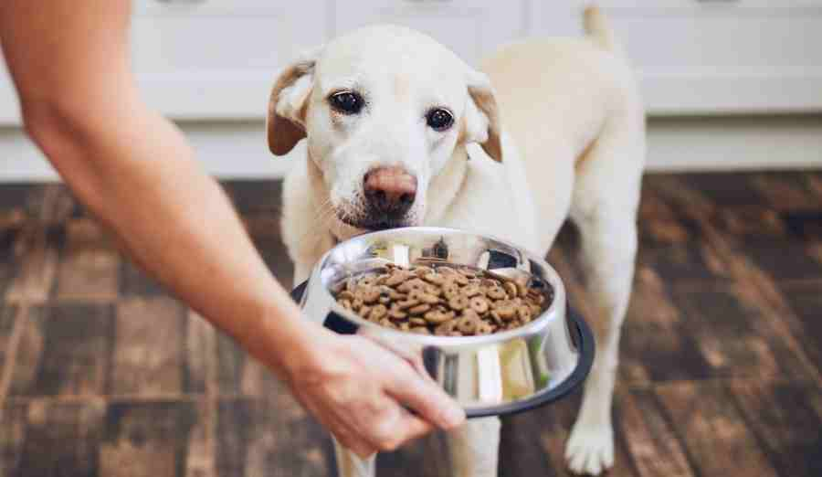 mystery meat in dog food
