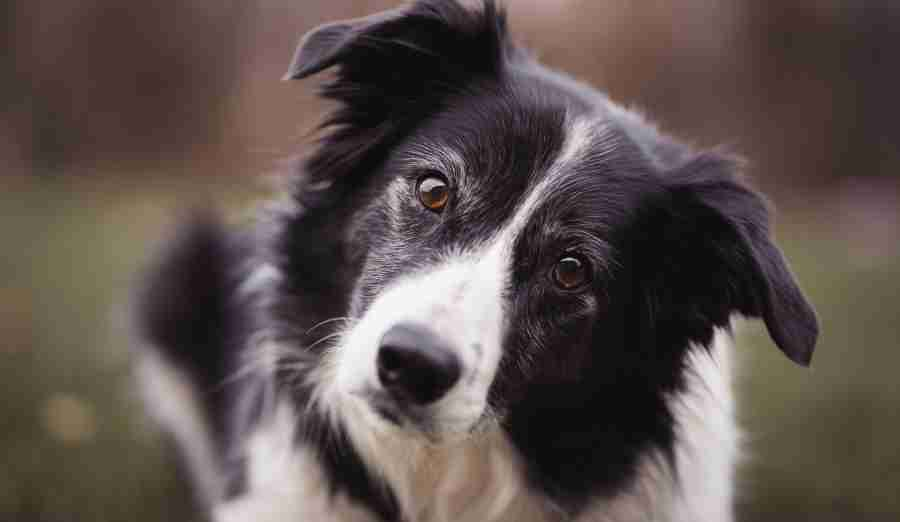 Top 12 Most Intelligent Breeds Of Dog Trifl Org