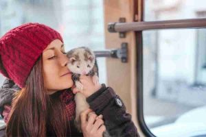 do ferrets love owners_1