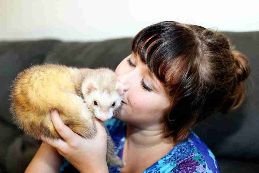 do ferrets love owners_2