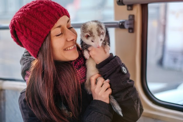 a women holding a pet ferret in her hands in what seems like a public transportation