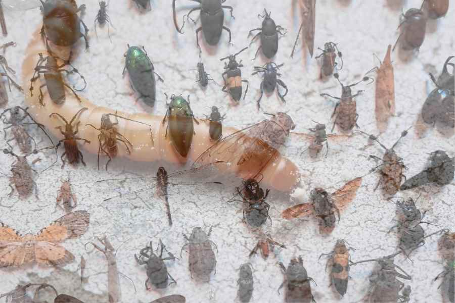 mealworm and insects on a floor