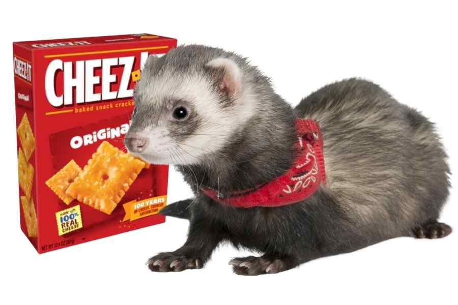 a ferret on a whit background looking at a box of cheez it