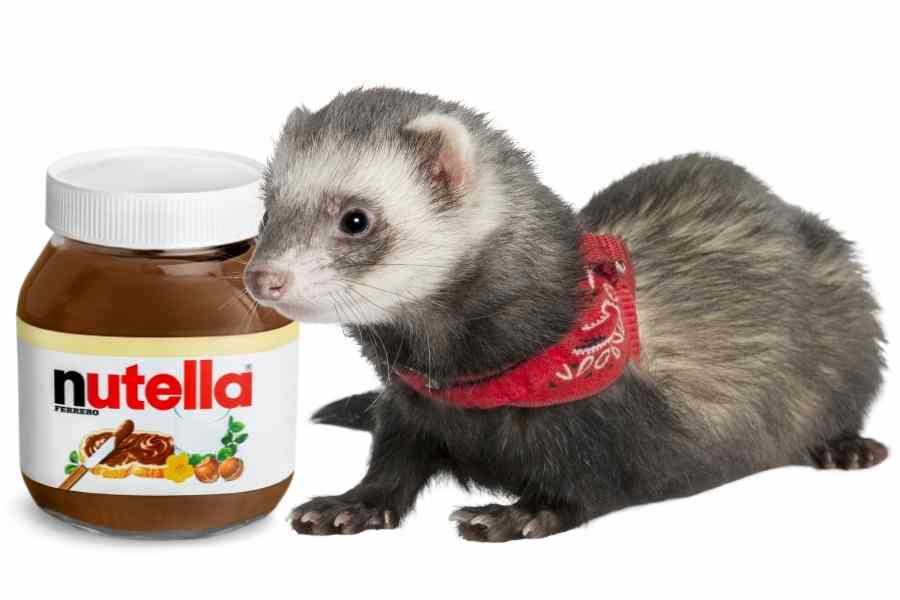 a ferret on a white background looking at a jar of nutella
