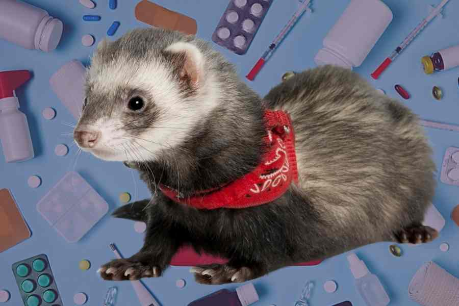 a ferret in front of sume medical devices and some medicine pills scissors and so on