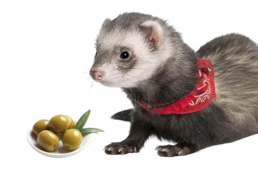 a ferret on a white background looking at some green olives in a small bowl_1