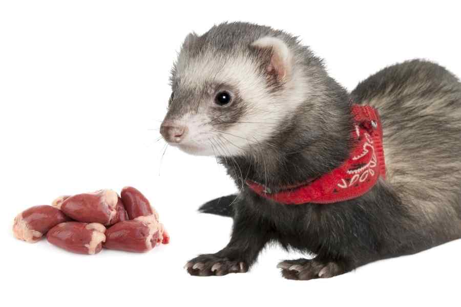 a ferret on a white background looking at some raw chicken hearts