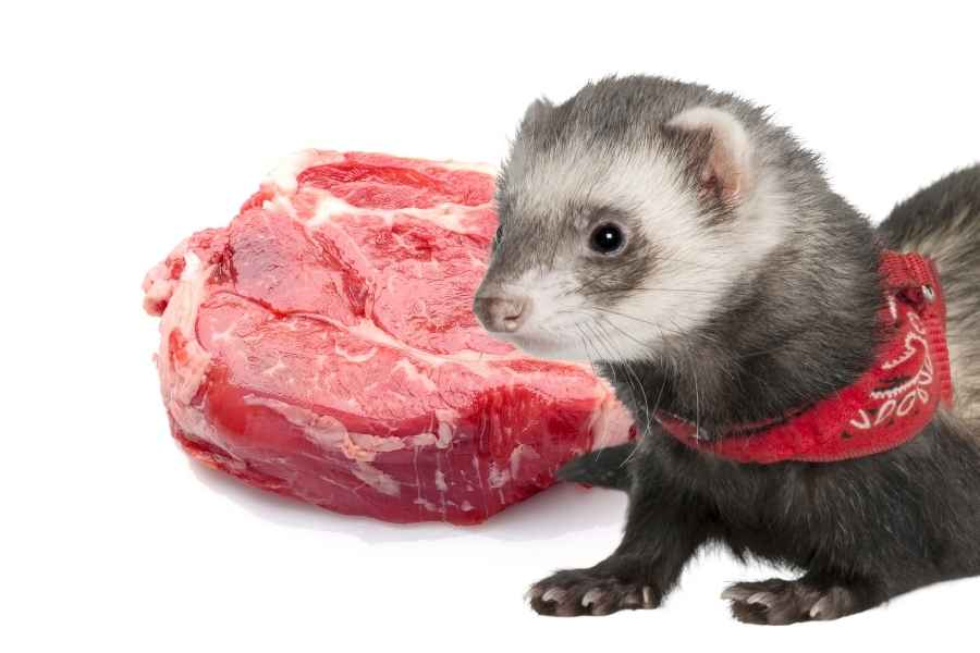 a ferret on a white background looking at some raw steak